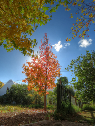 Franschoek-autumn-2