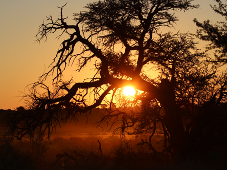 Sunset in the Kgalagadi
