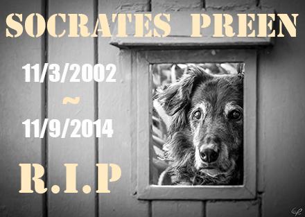 Tribute: Socrates Preen